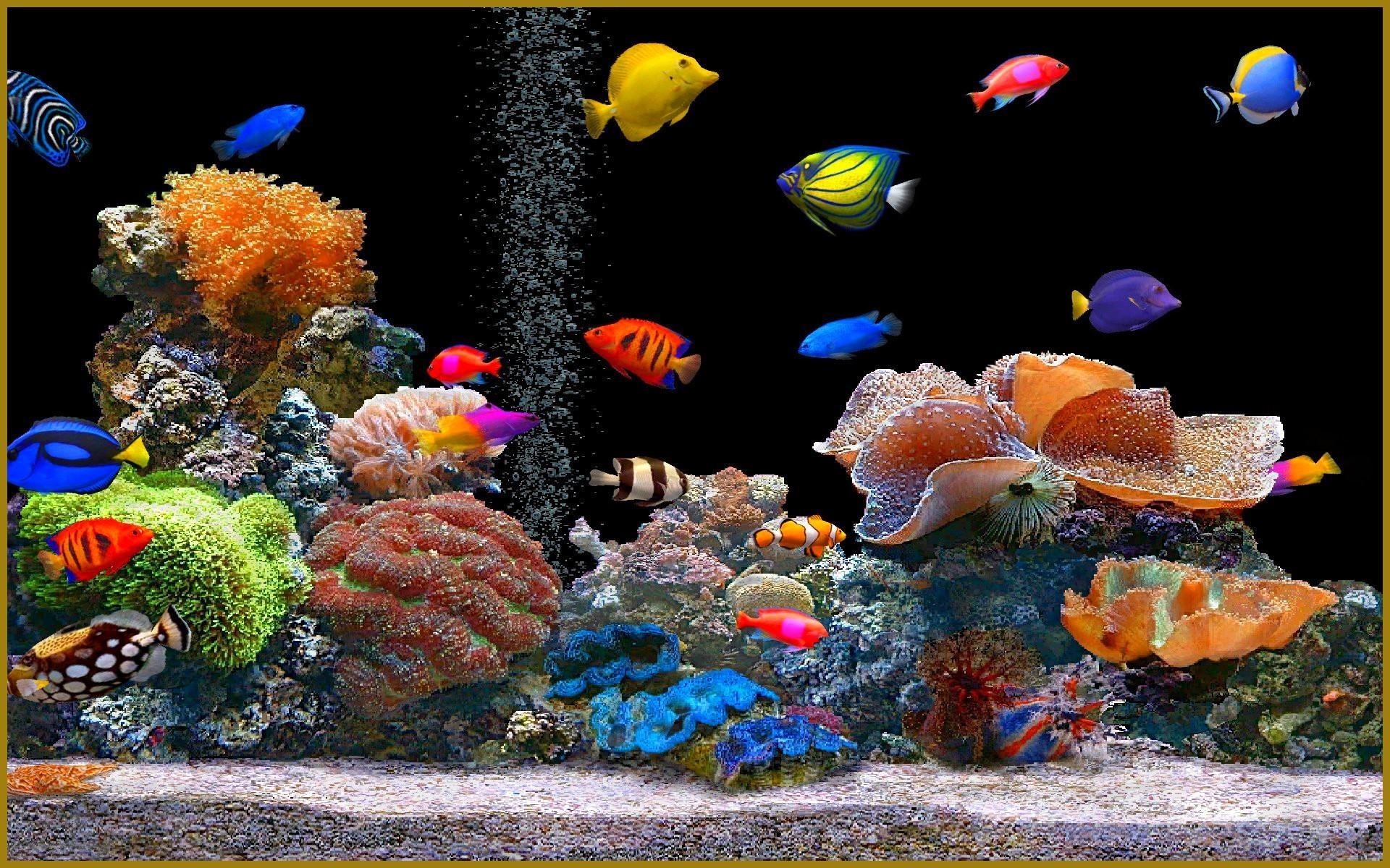 Животные красивые анимационные картинки анимации животных