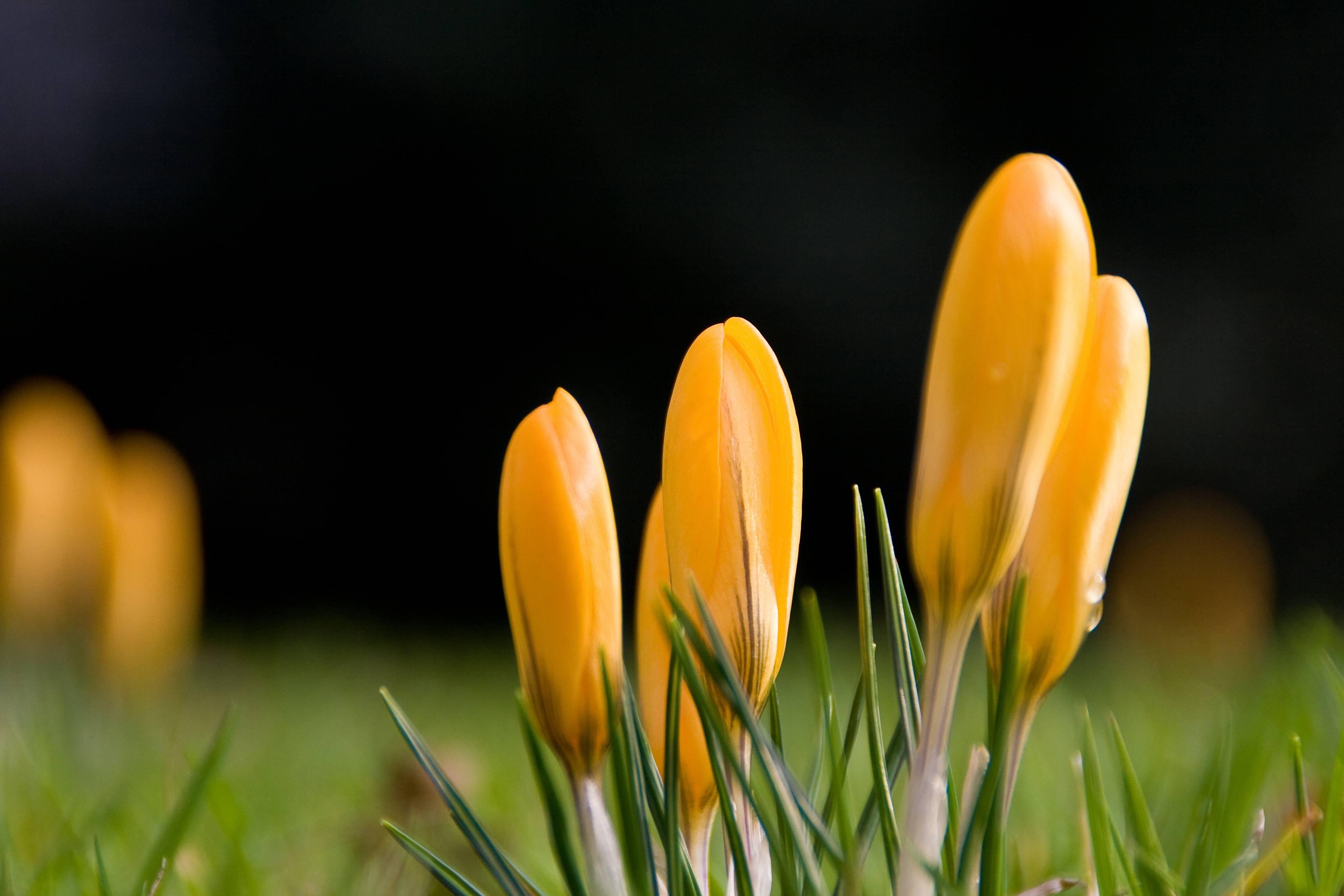Цветы желтые весна скачать