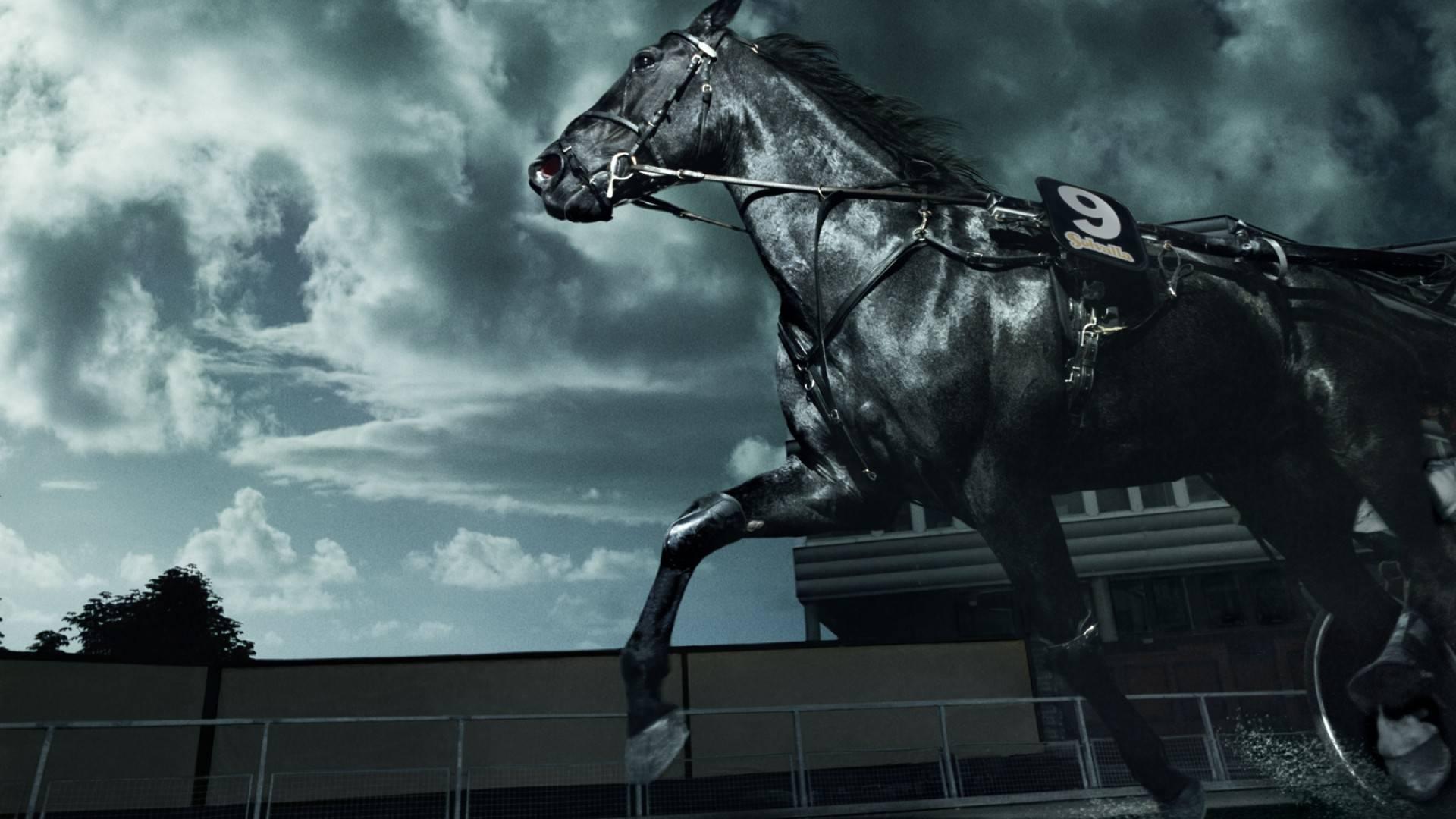 Черная лошадь бесплатно