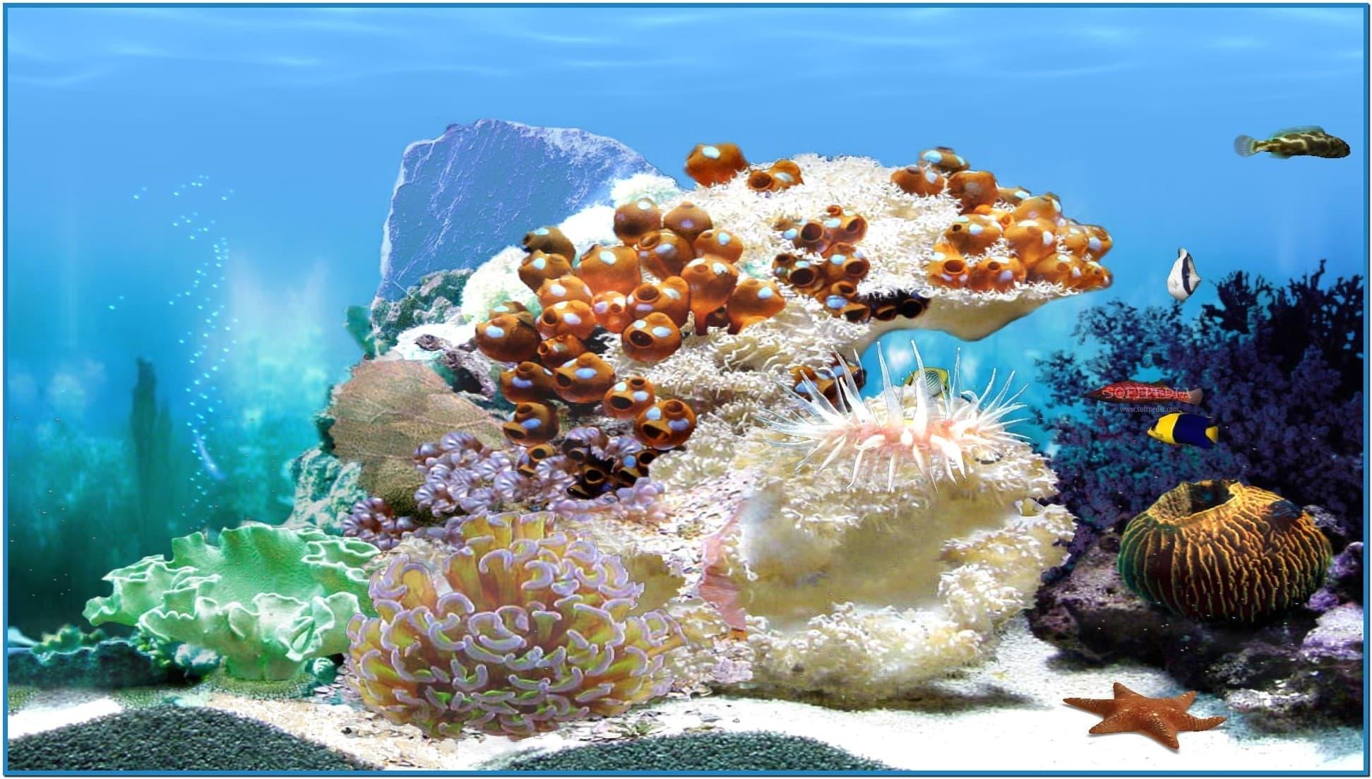 Обои для рабочего стола живой аквариум