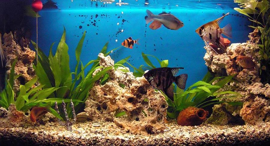 Для, аквариум картинки с анимацией