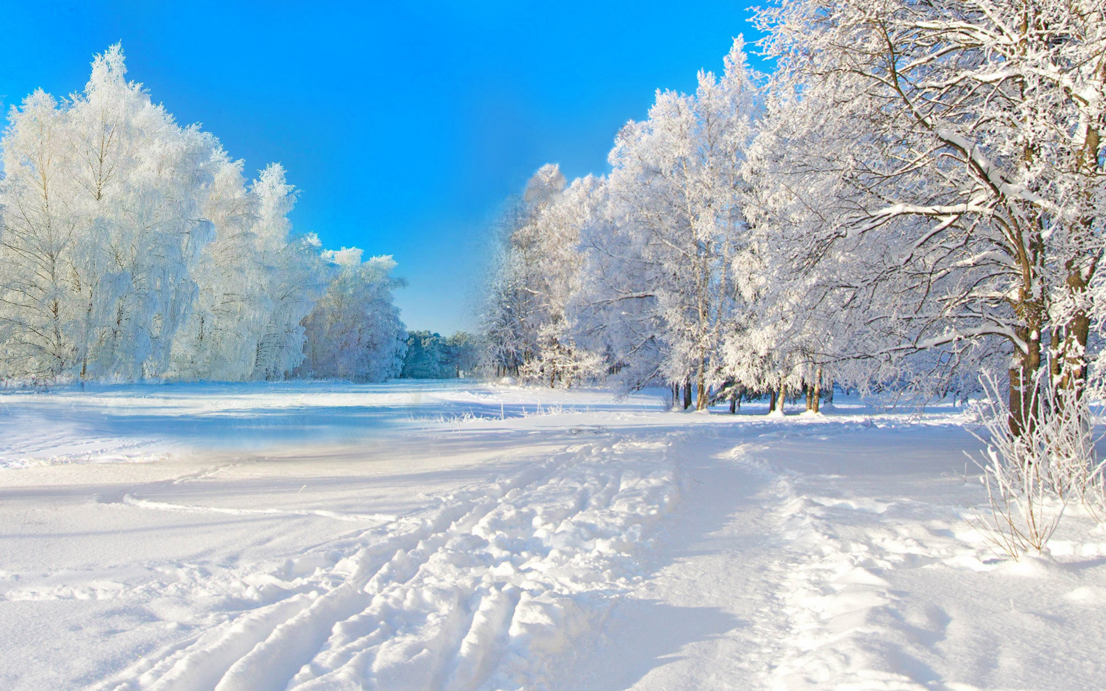 солнечная зима в лесу скачать