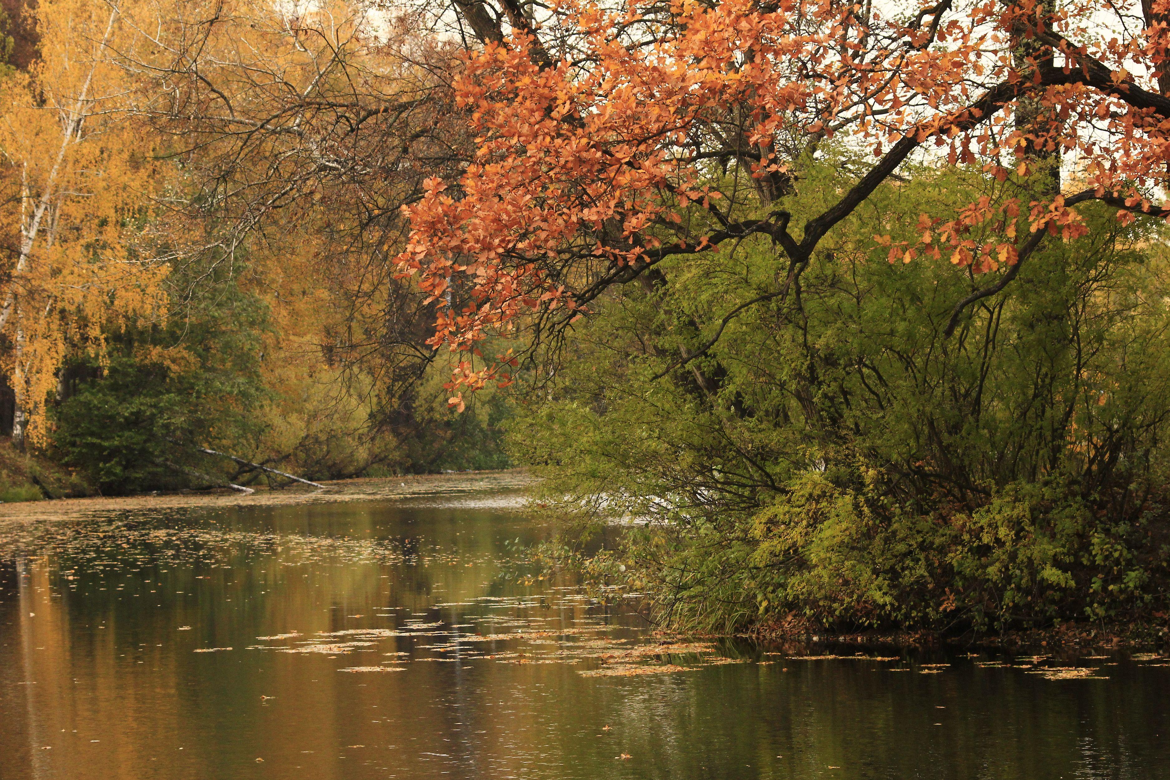 природа деревья река осень бесплатно