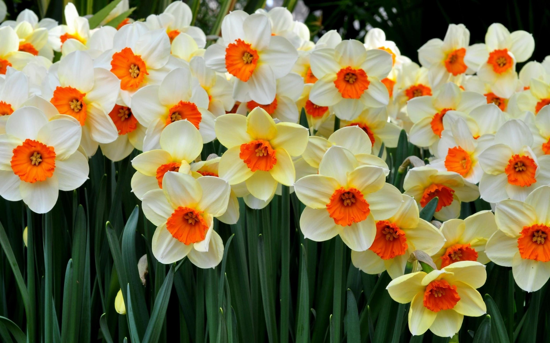 Обои ромашка белая, фотографии капли росы, весна пришла скачать на ... | 1800x2880