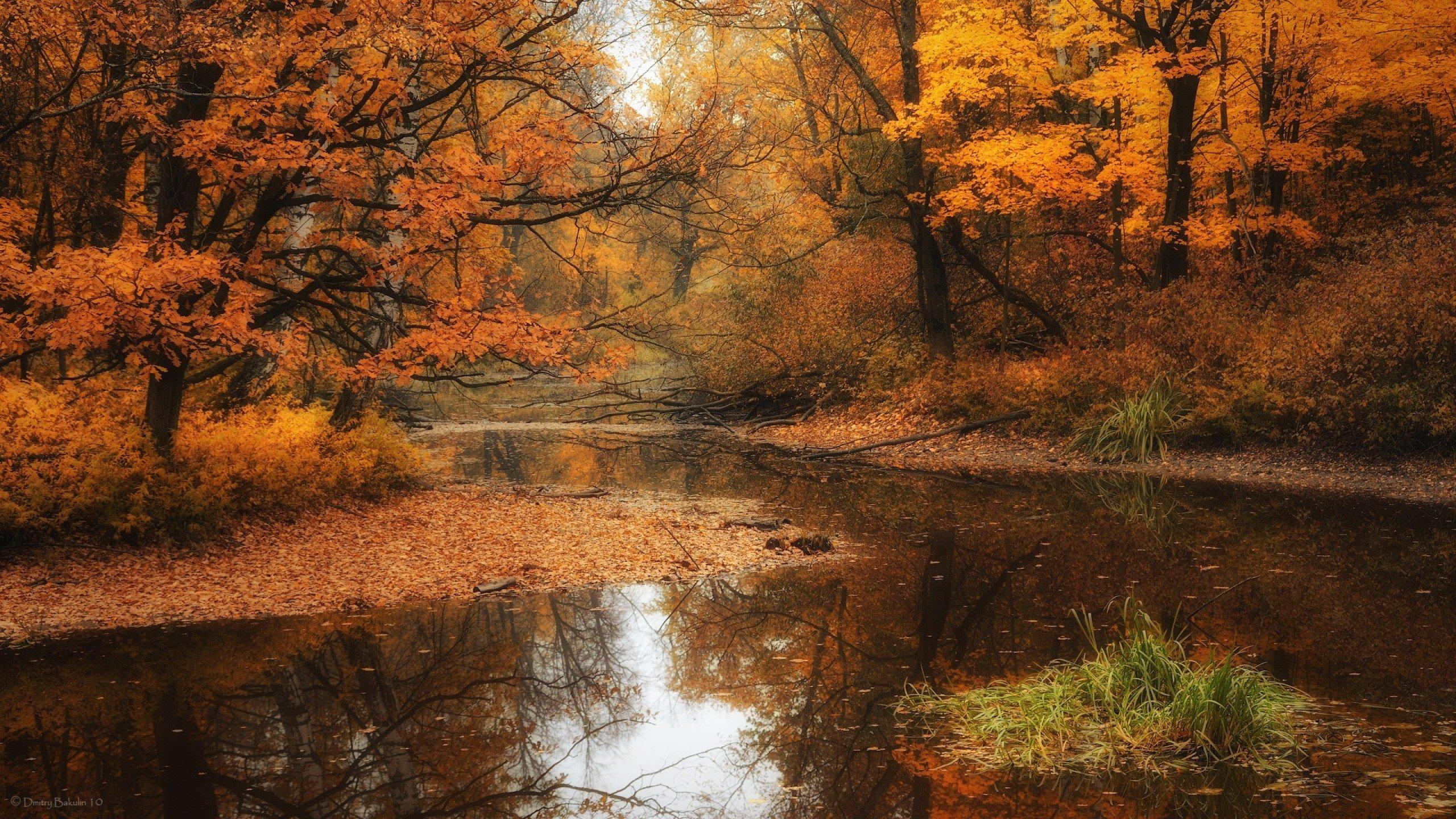лес, осень, листопад загрузить