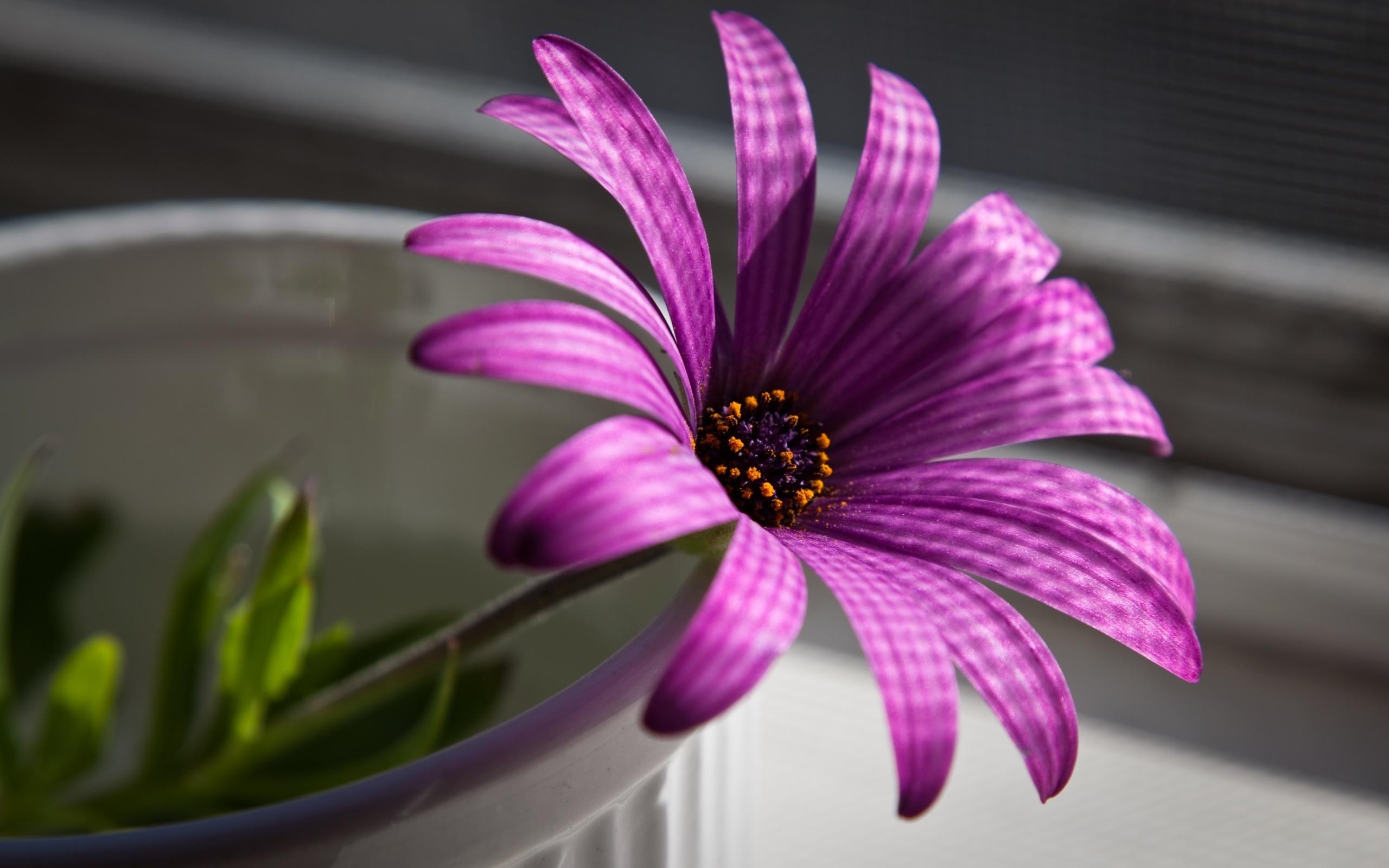 Цветы обои для рабочего стола картинки цветов на рабочий