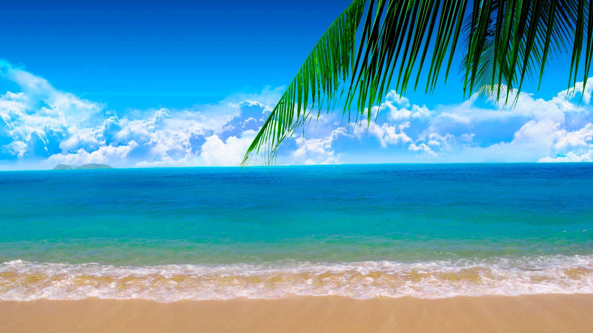 пальмы небо пляж подборки