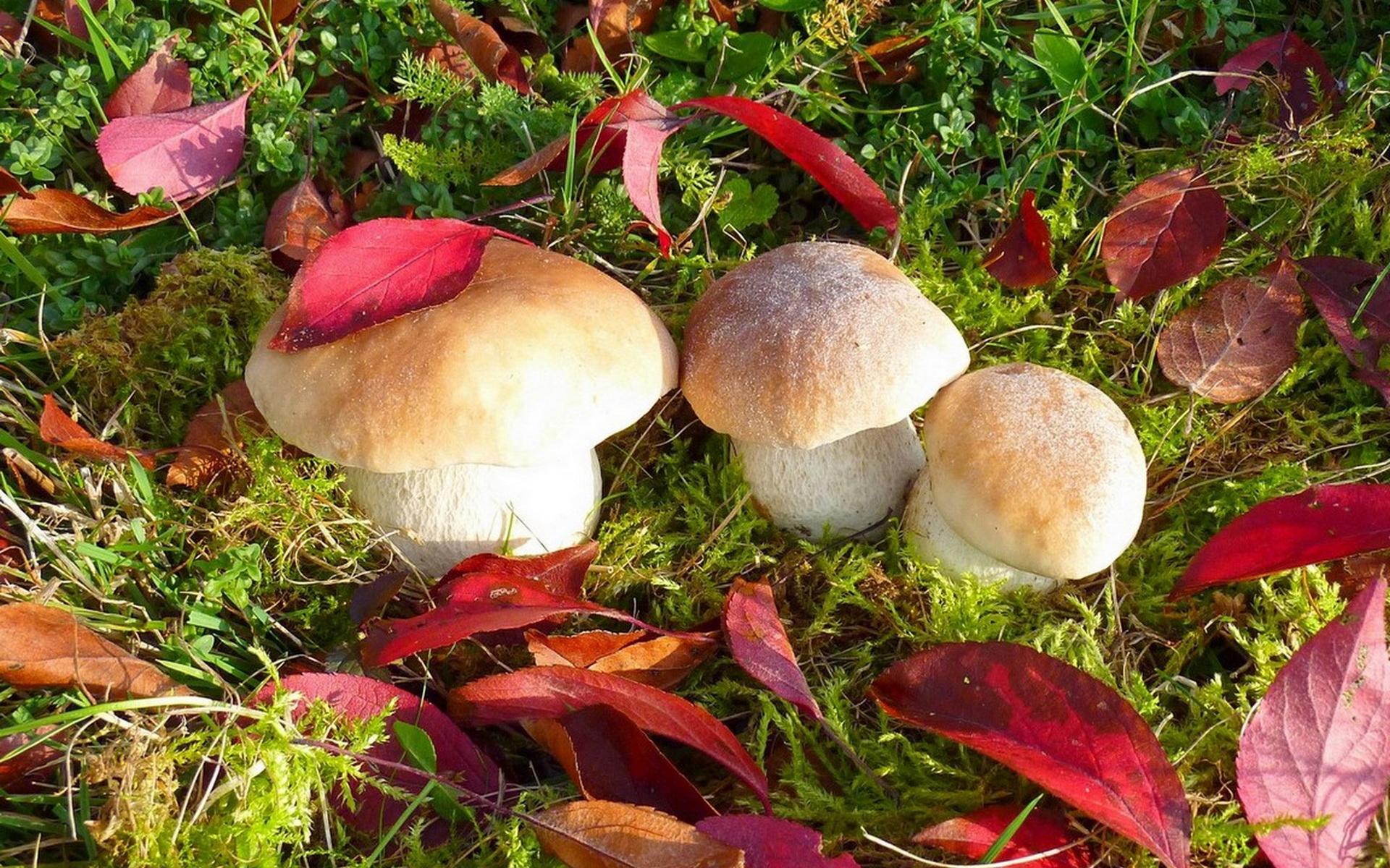 беленькие грибочки без смс