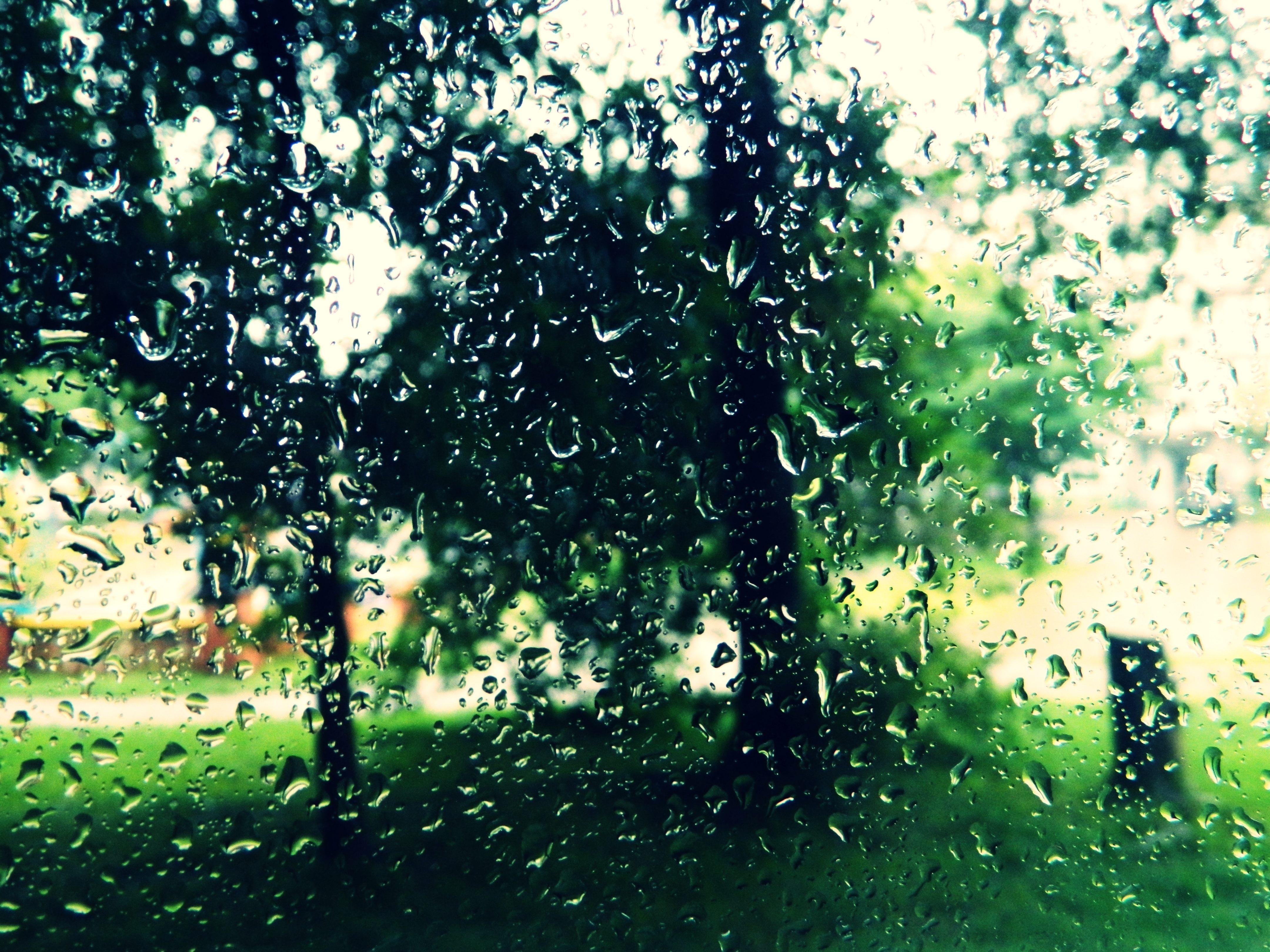 дождь, капля, лист, лето без смс