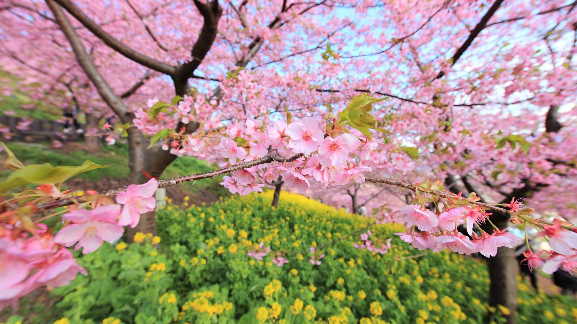 Фото и картинки весна на рабочий стол в хорошем качестве