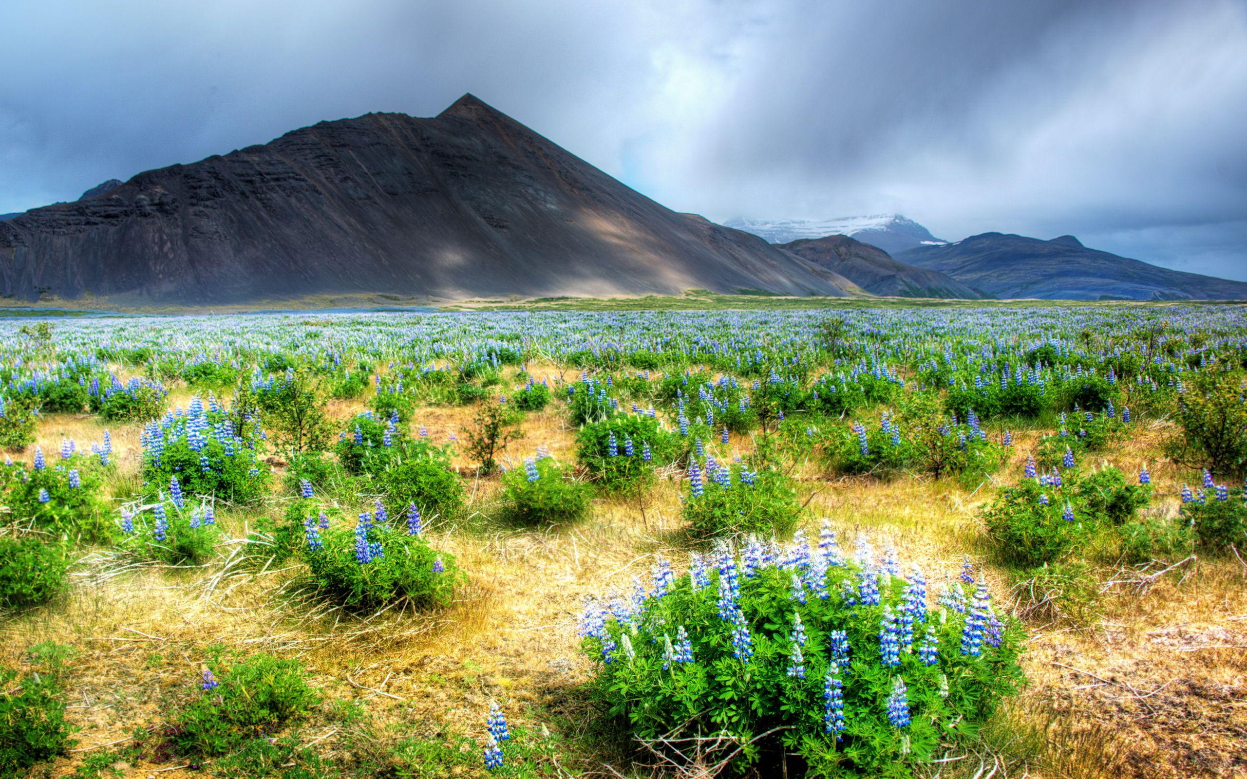 Фото природы карелии высокого разрешения