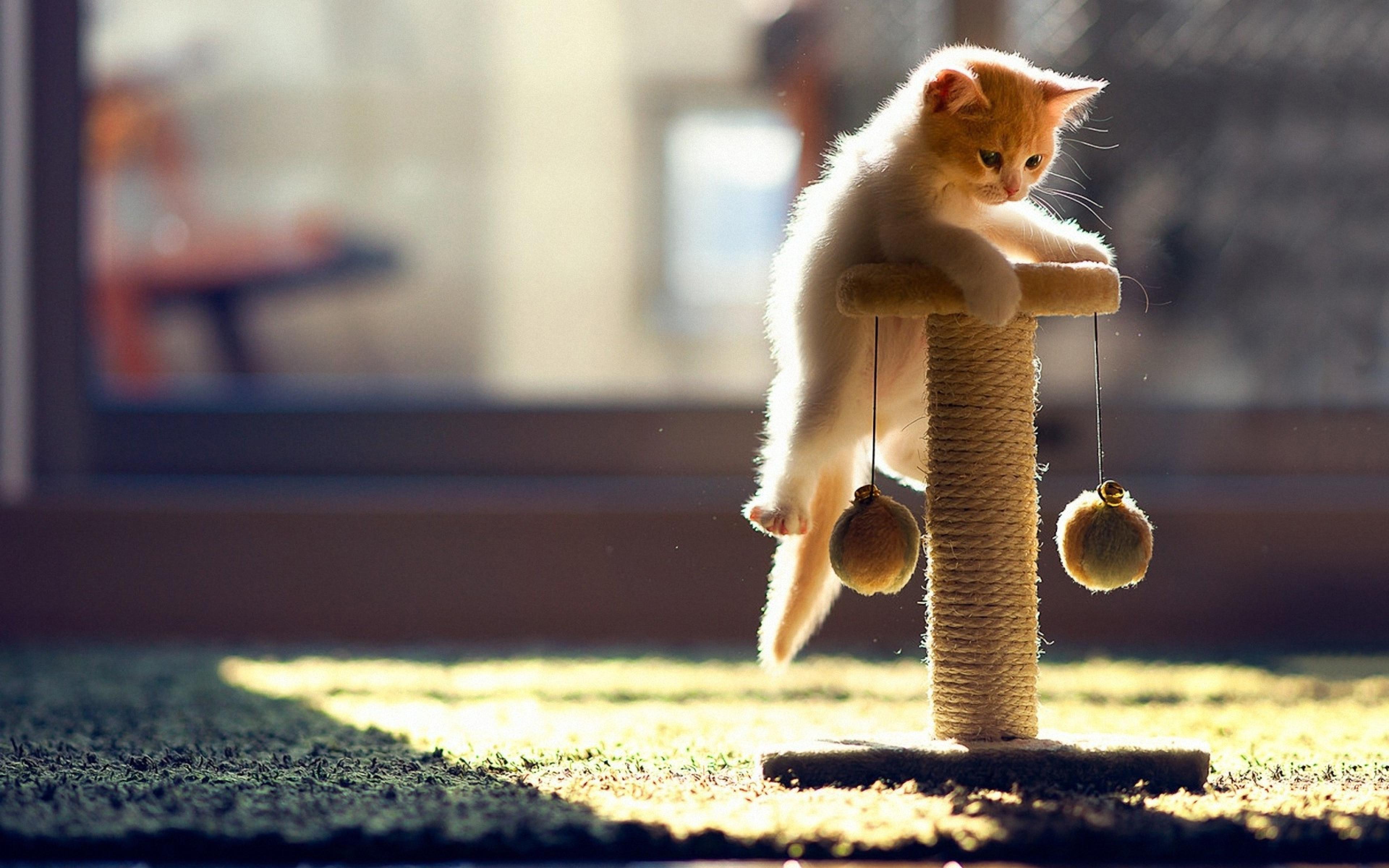 Кот с мягкой игрушкой без смс