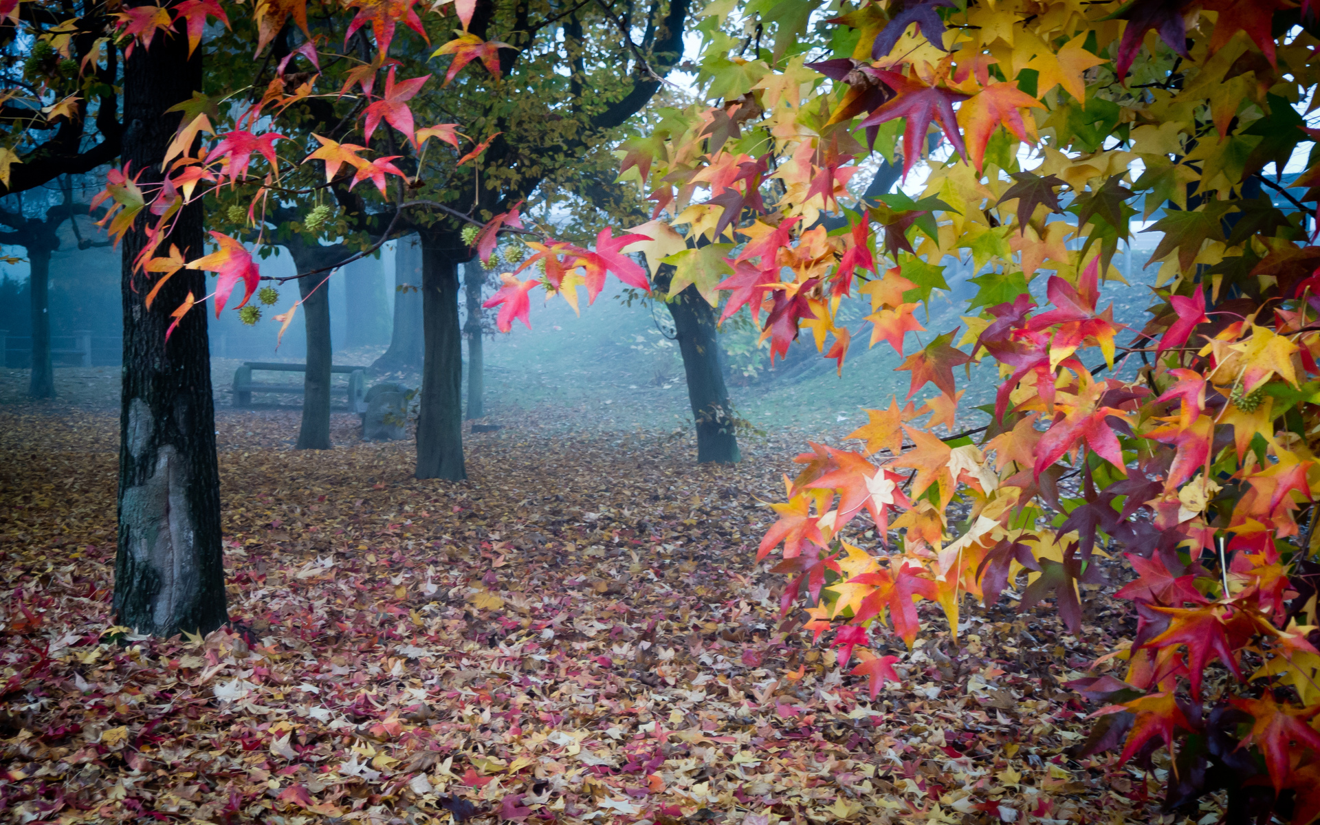 Лист осени скачать