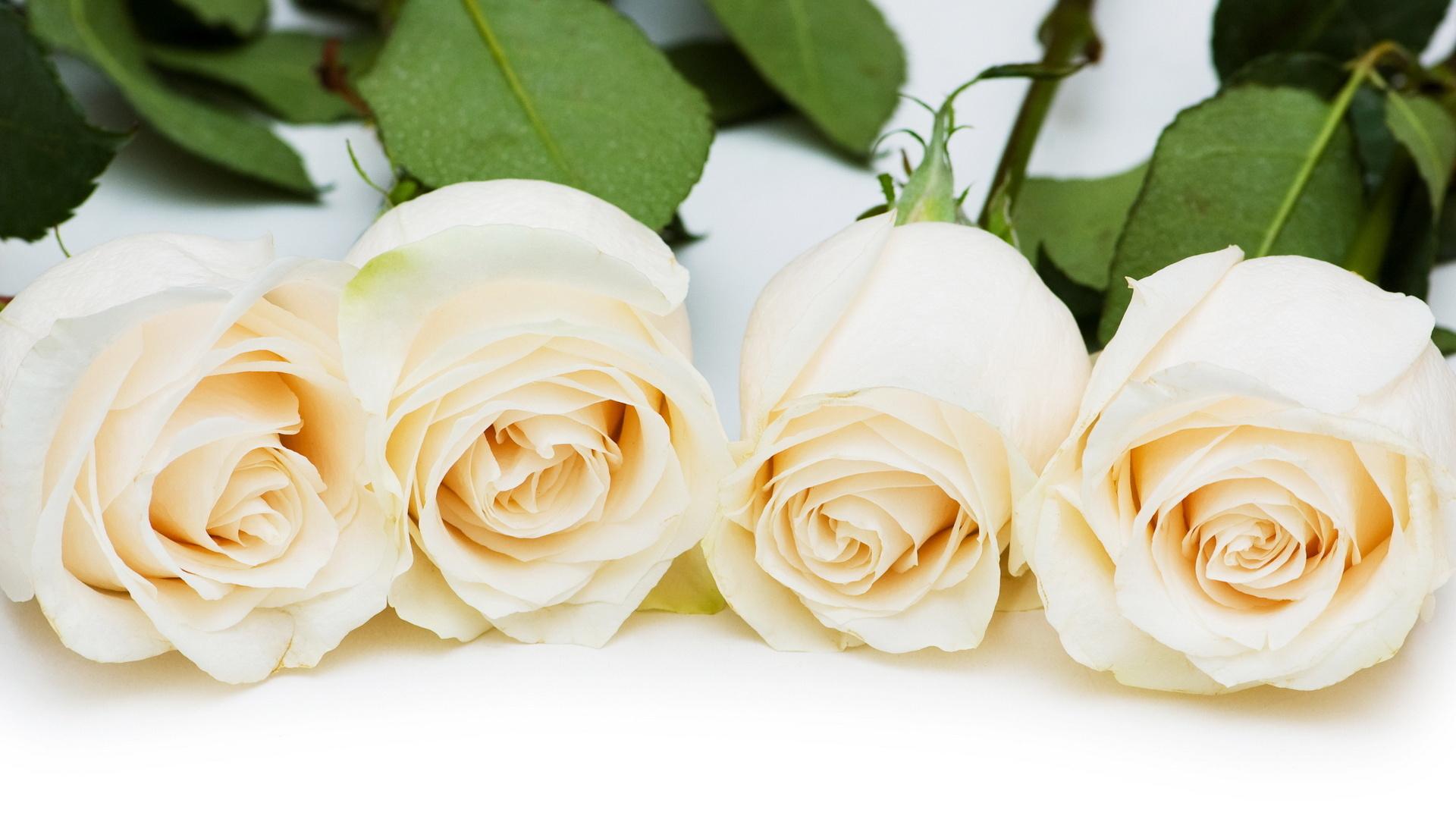 обои на рабочий стол 1920x1080 розы № 43201 бесплатно