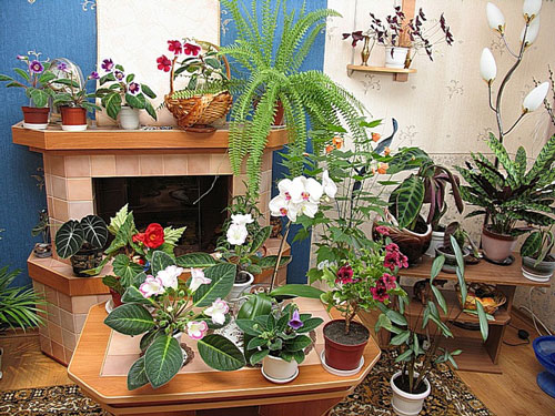 Расстановка комнатных цветов и