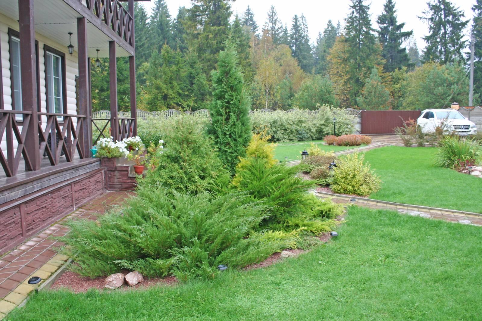 Озеленение участка перед домом фото 177