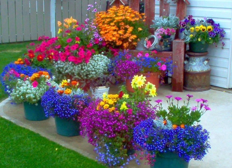 Фото оформление уличными цветами горки