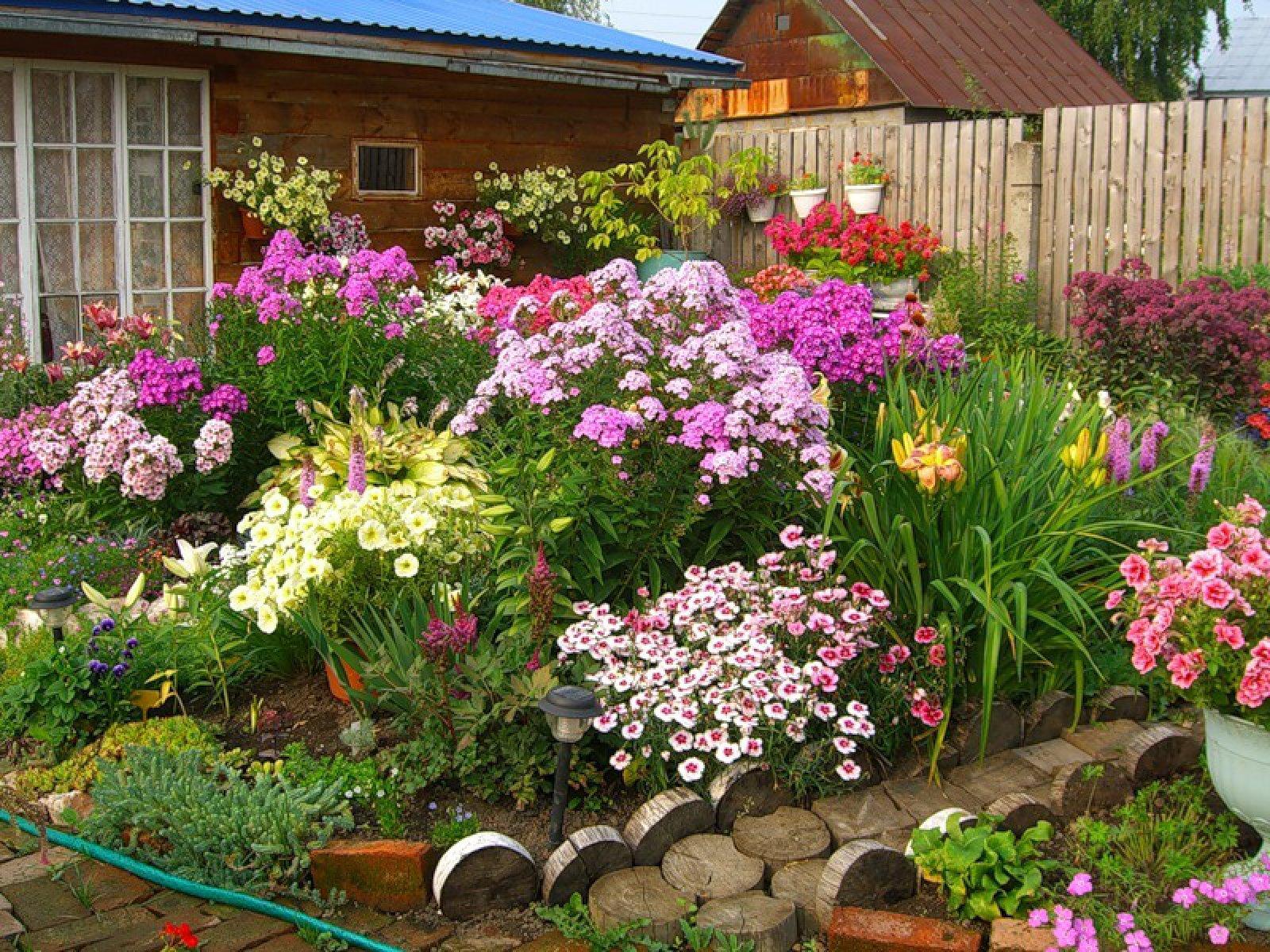 Цветы клумба простые