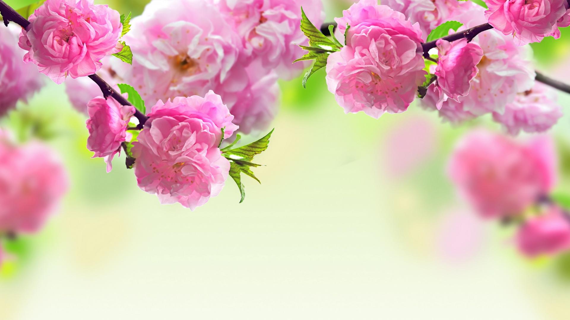 Открытки весны на рабочий стол