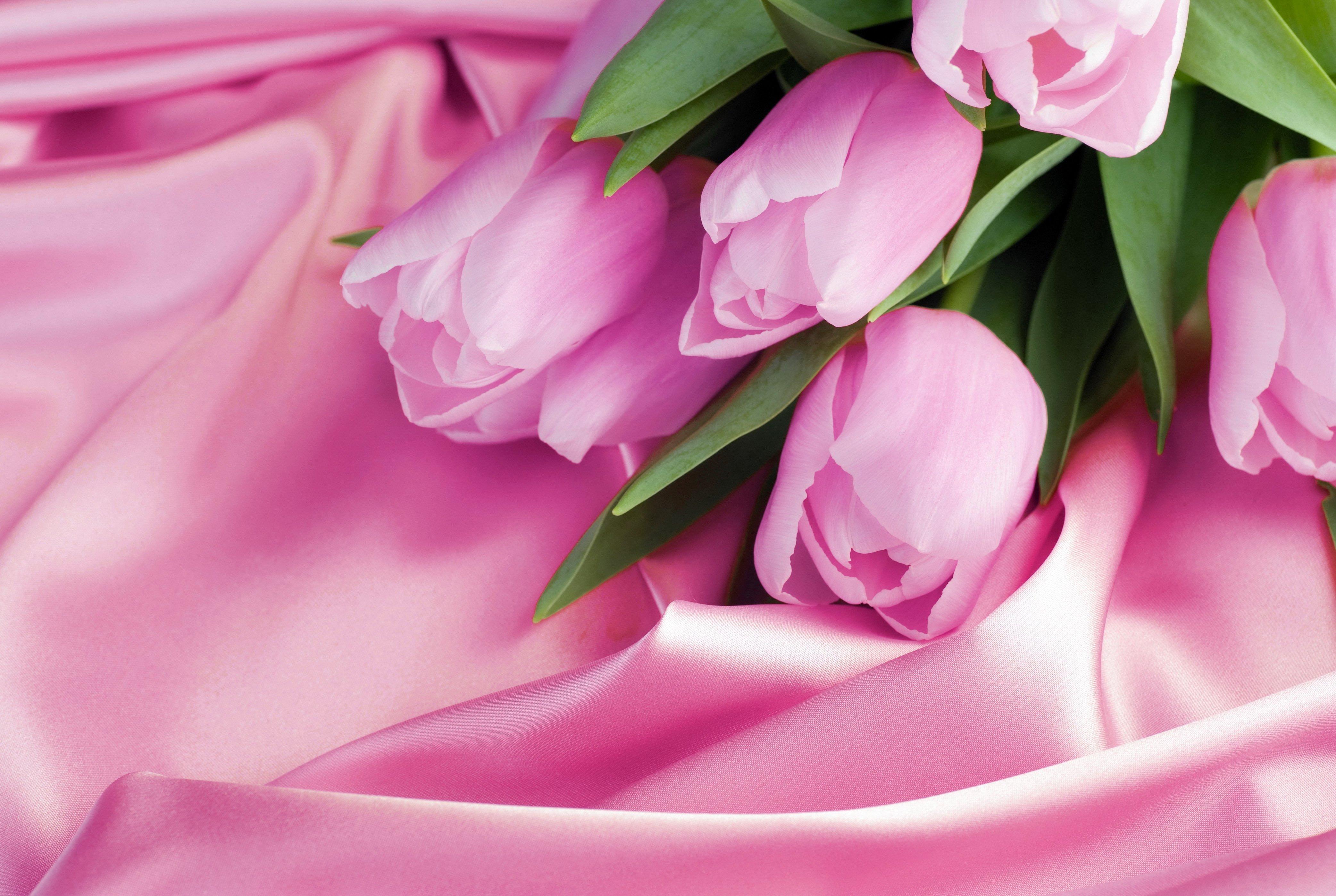 Бесплатные картинки на рабочий стол только тюльпаны 6