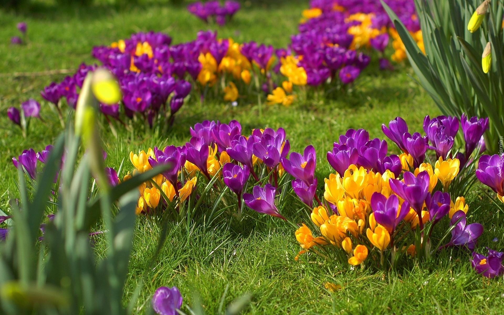 Темы весна обои на рабочий стол