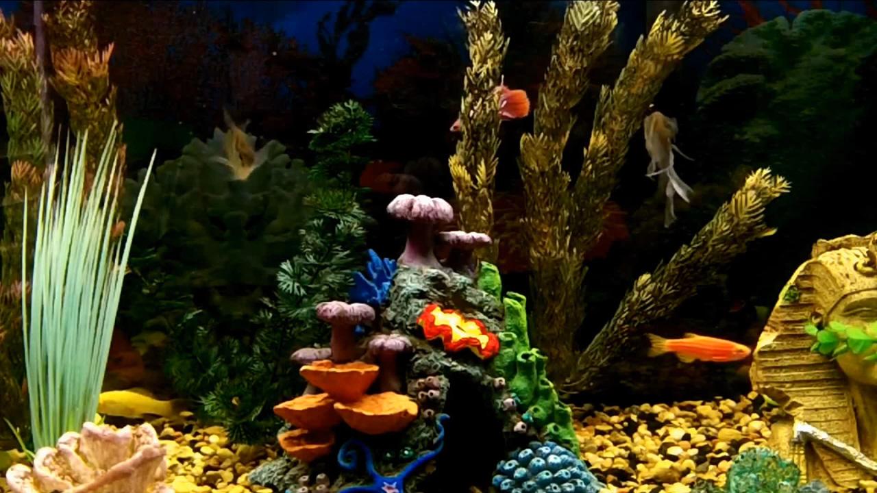 Живые обои аквариум скачать бесплатно на компьютер 8