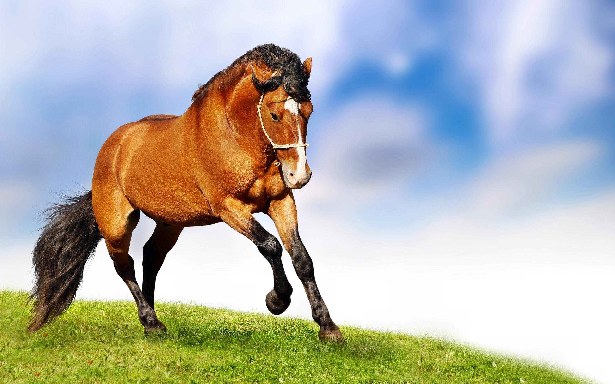 год лошади обои для рабочего стола № 528476  скачать