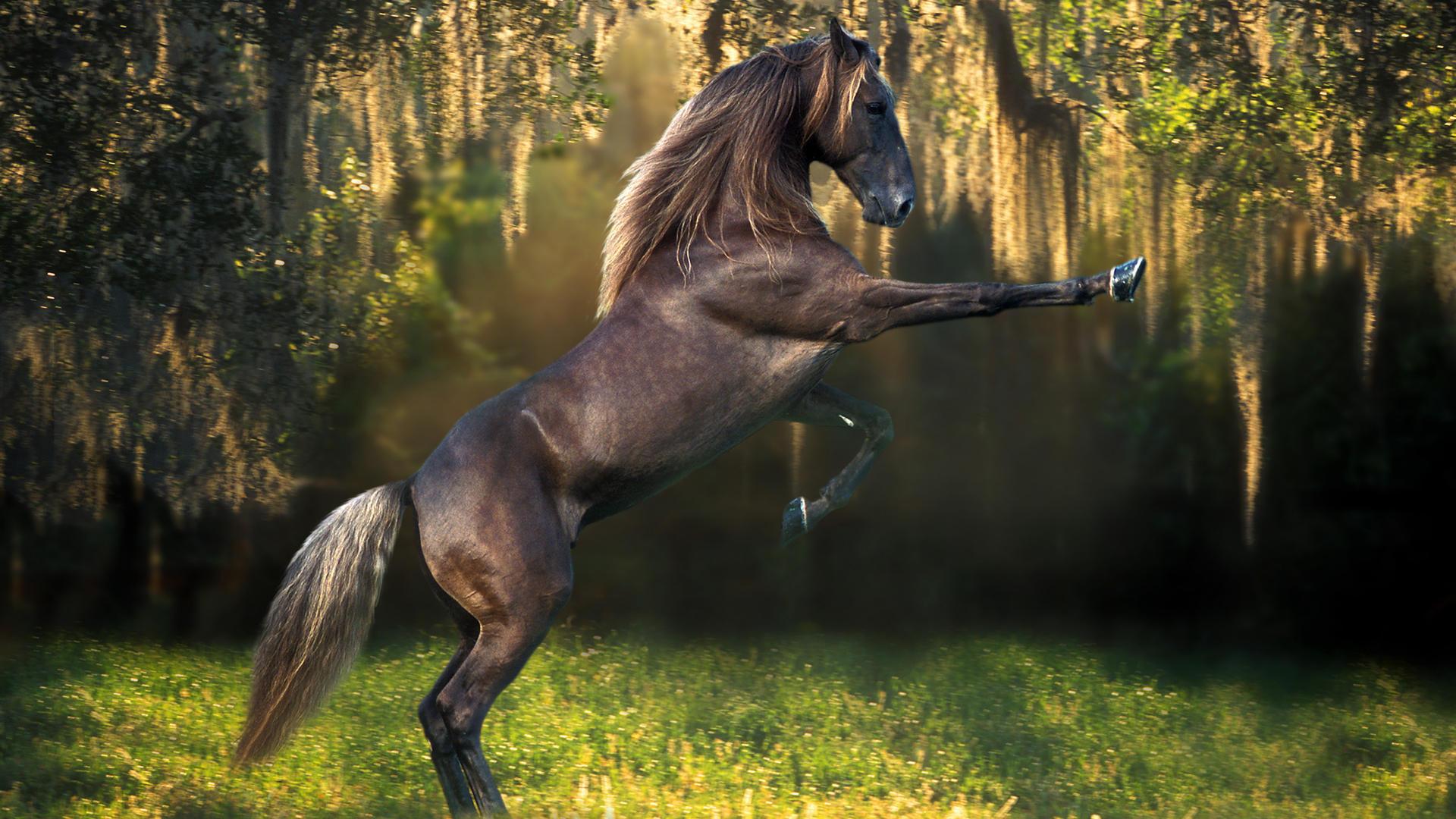 лошади обои на рабочий стол 1280х1024 № 489541 без смс
