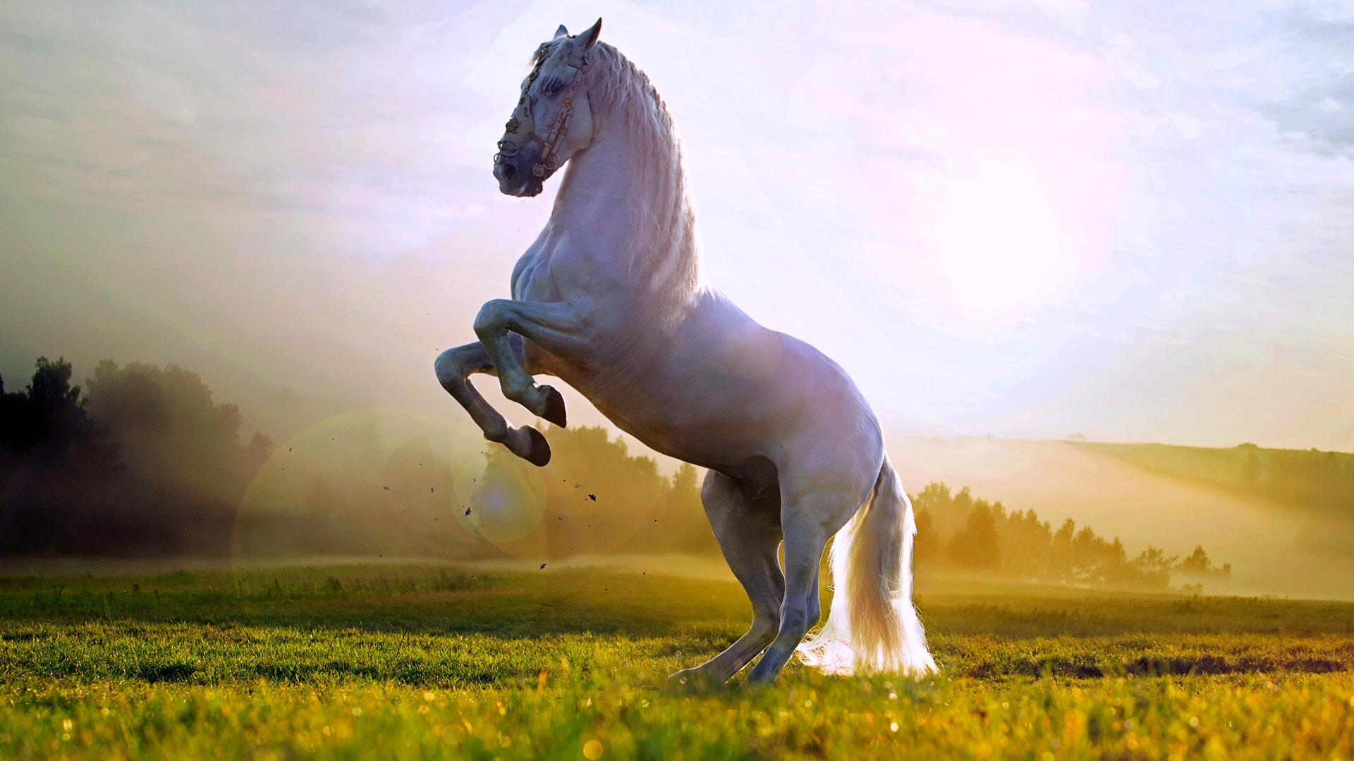 лошади обои на рабочий стол 1366x768 № 489468 загрузить
