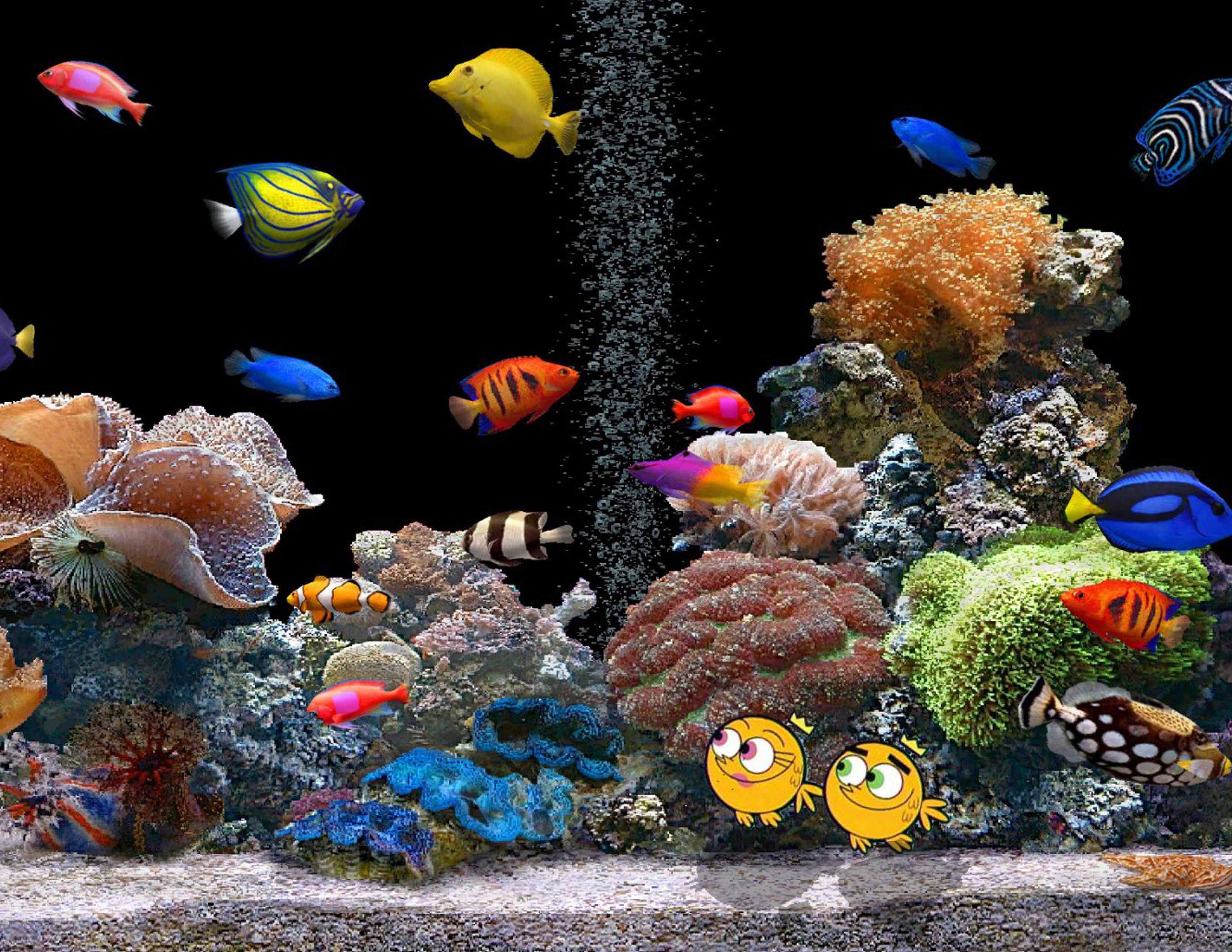 Обои для стола рабочего аквариум живой