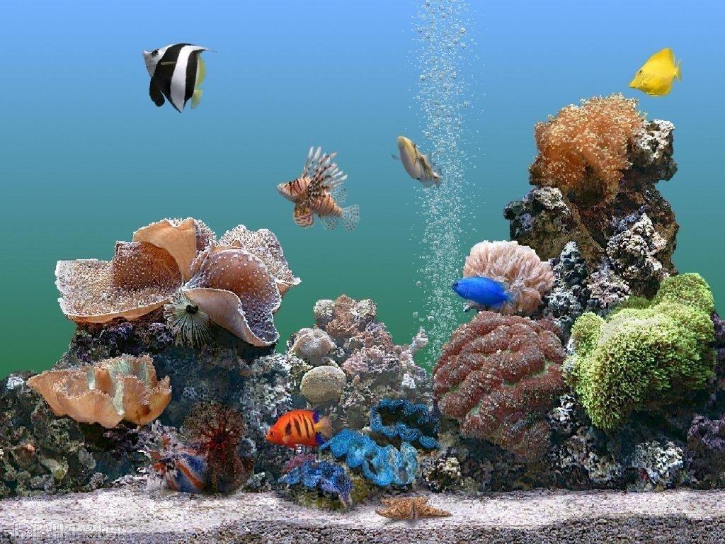 Картинки на рабочий стол аквариум с движущими рыбками