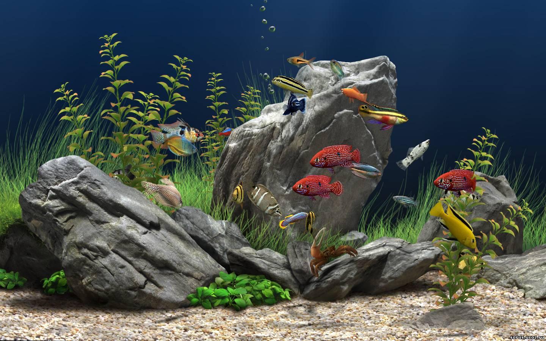 Бесплатно живой аквариум обои на рабочий стол