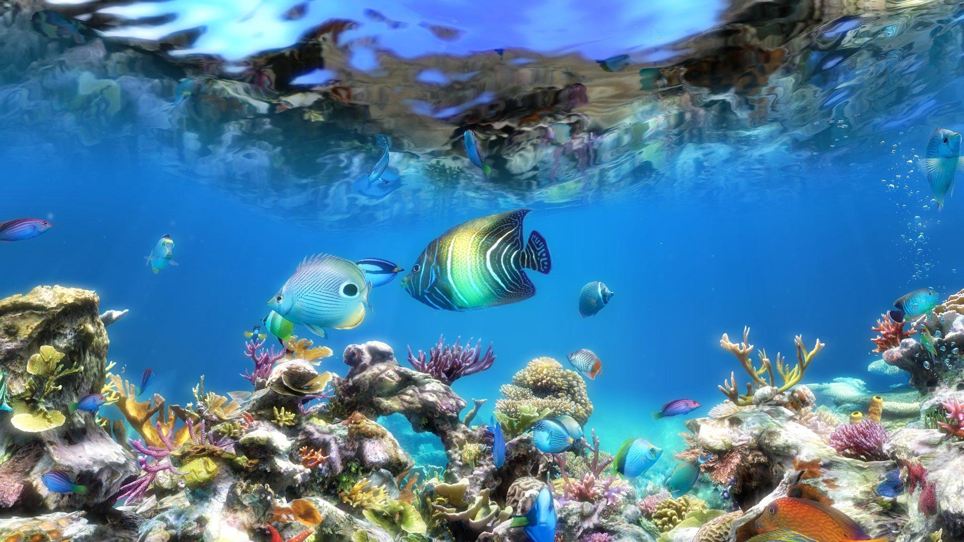 Анимационные обои аквариум на рабочий стол