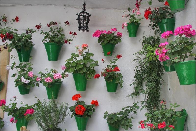 Які кімнатні квіти корисно тримати в квартирі.