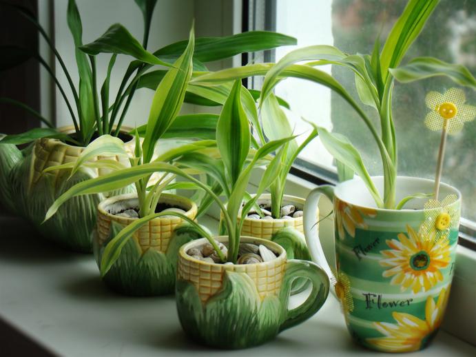 Домашние цветы в вазонах