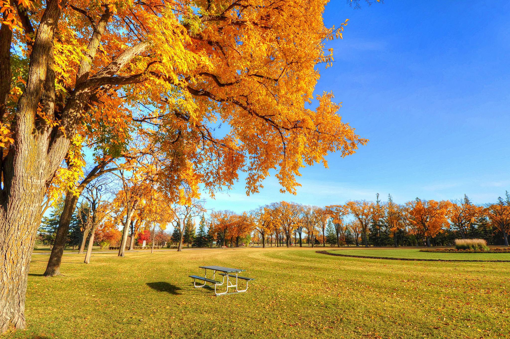Скачать картинки осень для рабочего стола бесплатно 10