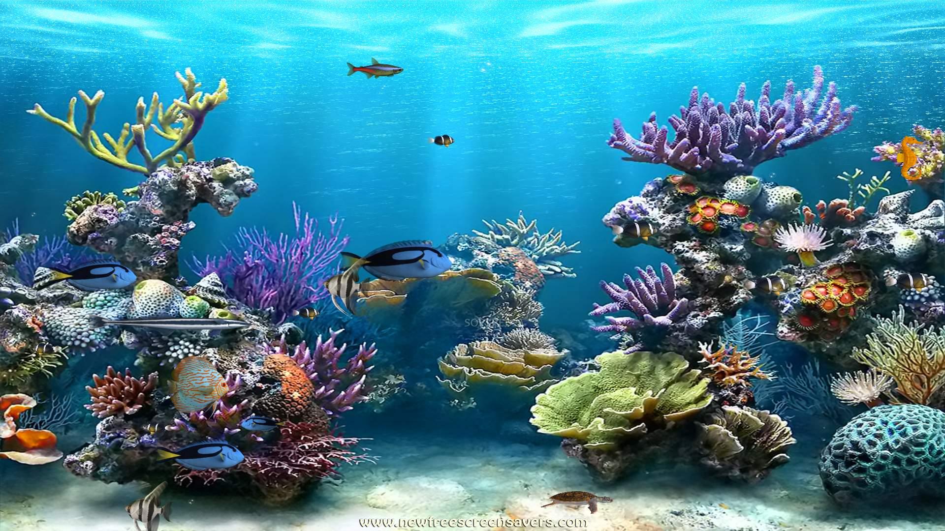 Moving animated ocean screensavers
