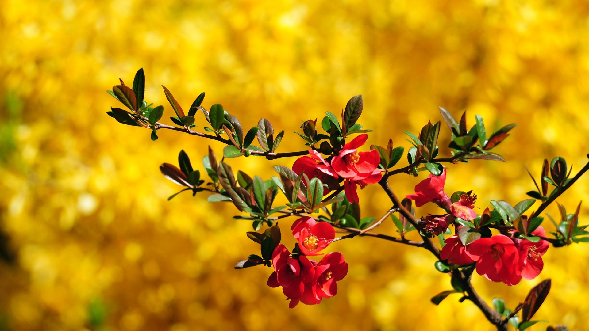 цветы flowers  № 936072 загрузить