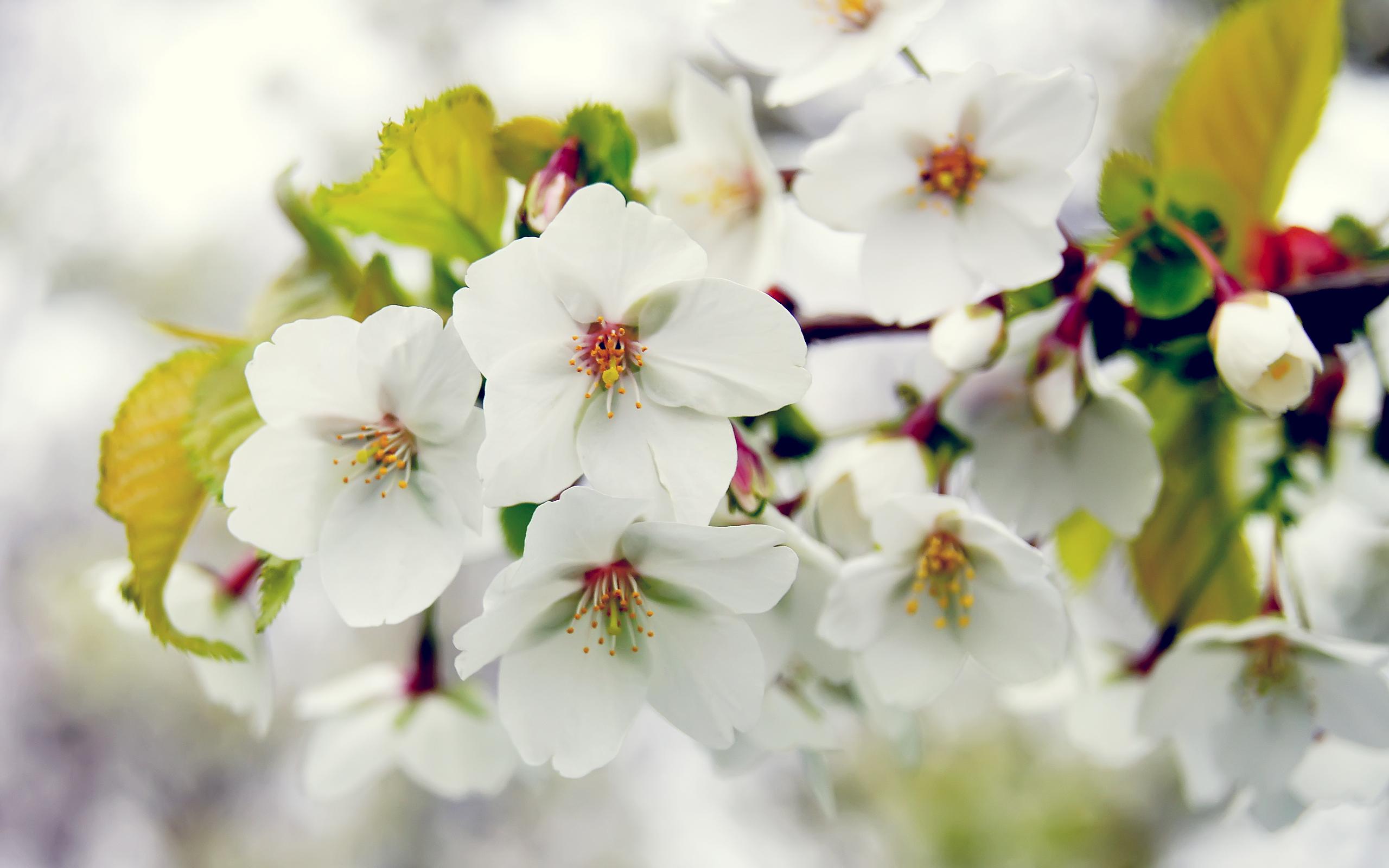 Обои рабочий стол весна цветы