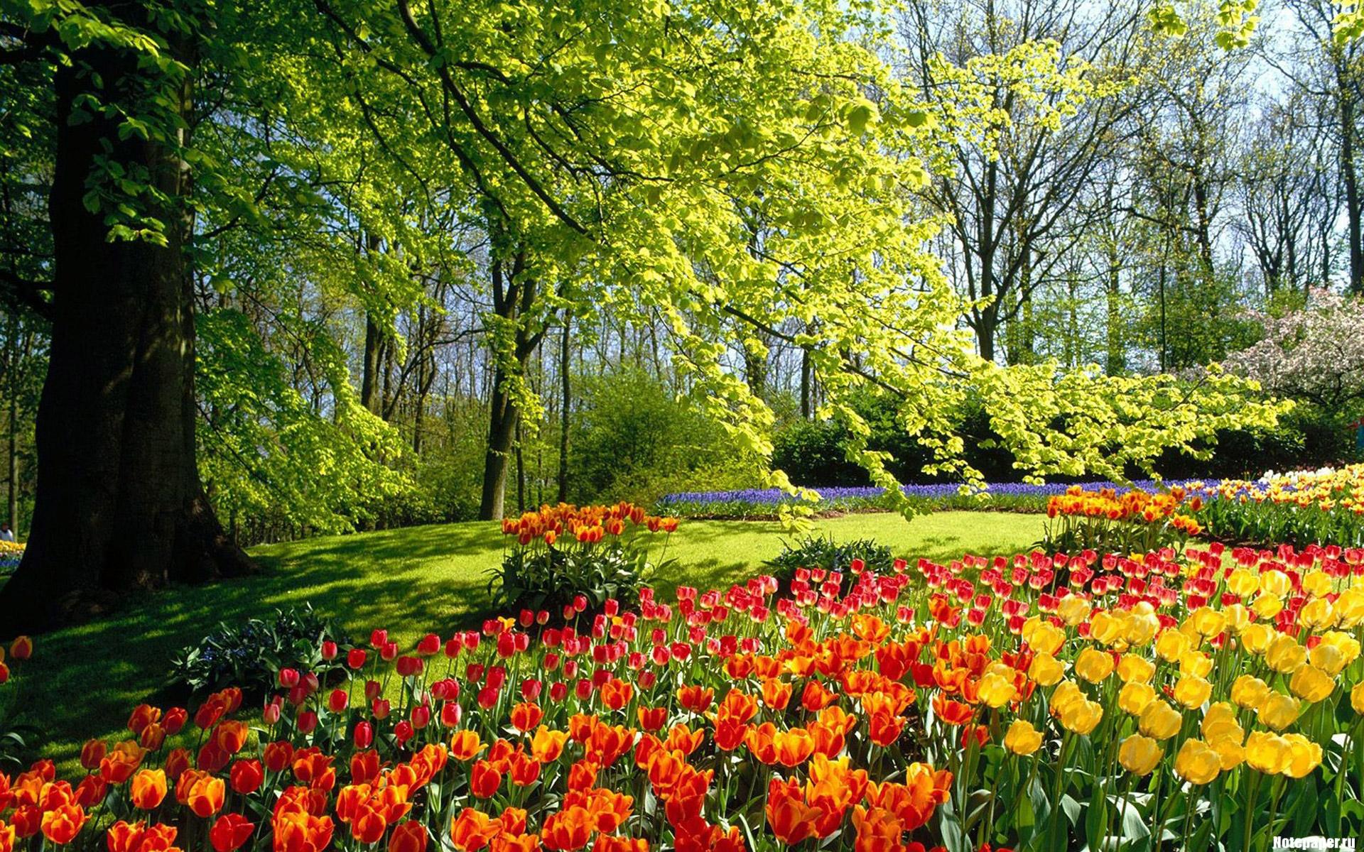 Обои для рабочего стола сад весной