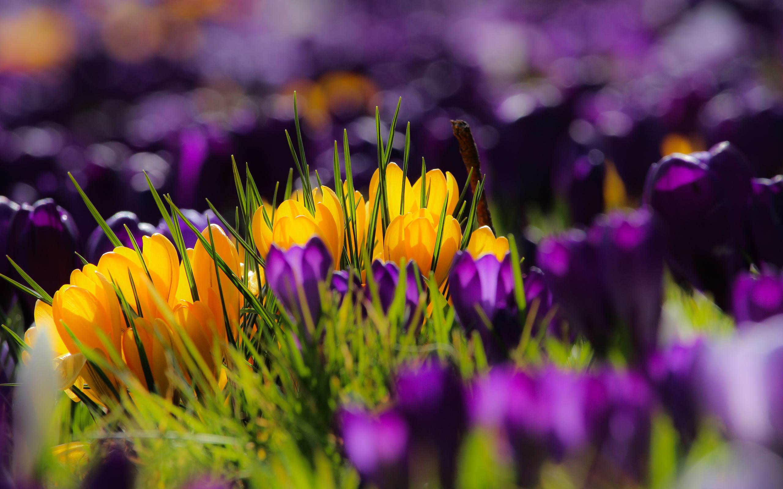 Картинки Весна обои весна на рабочий стол  4я страница